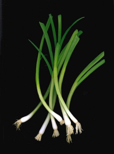 Scallions Bouquet
