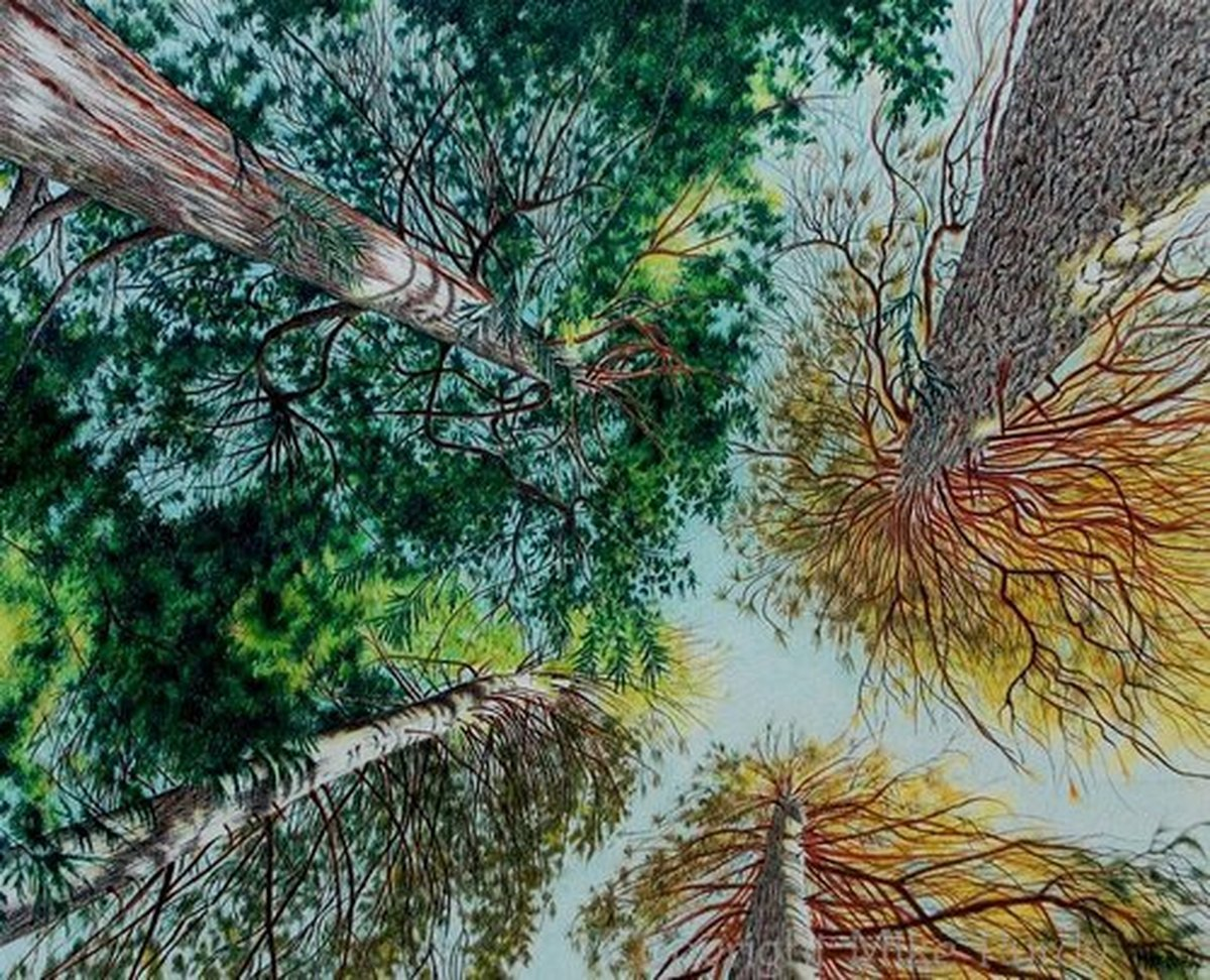 Landscape Colored pencil Drawings: Reaching for the Sky by Mike ...