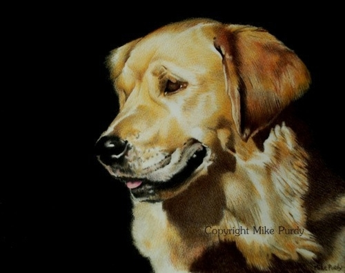 Golden Retriever by Mike Purdy, cpsa, cpx
