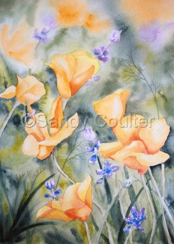 California Poppies by Sandy Coulter