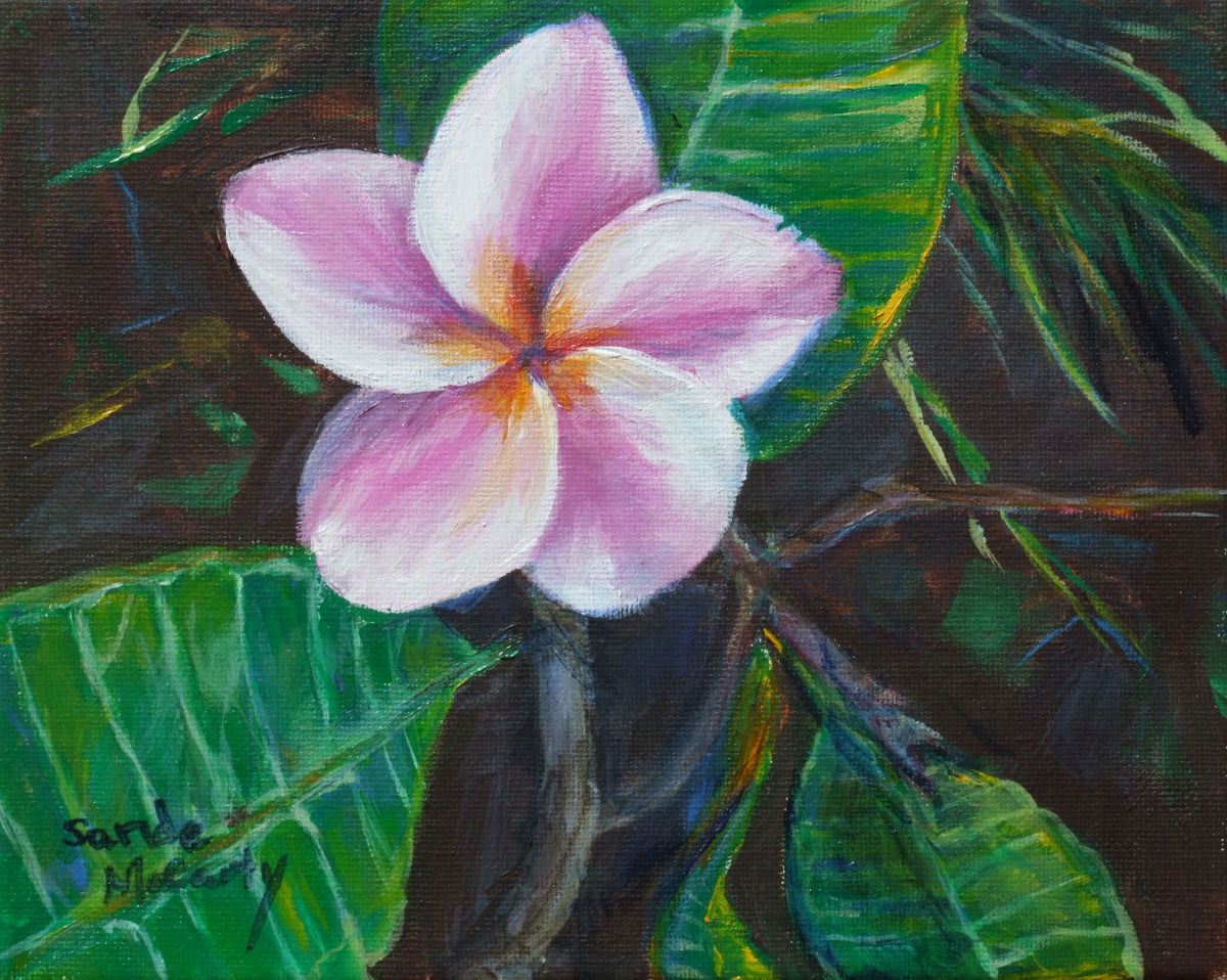 Pink and White Plumeria (large view)