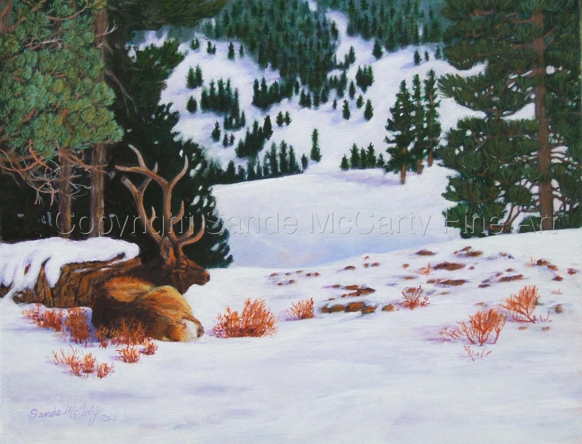 Resting His Bones - Elk in Winter (large view)