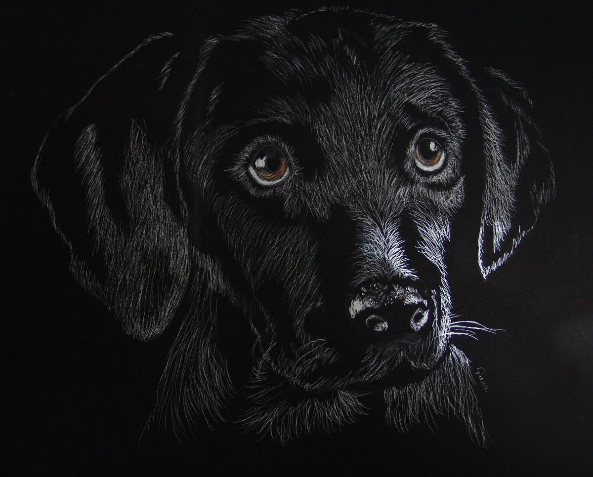 Black Labrador Retriever Puppy (large view)