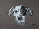 Pastel portrait drawing of a dalmatian,pet portrait, pet portrait, pet portrait, pet portrait, pet portrait, pet portrait, pet portrait, pet portrait, pet portrait, pet portrait, pet portrait, pet portrait, (thumbnail)
