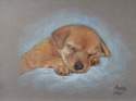 pastel drawing of a puppy (thumbnail)