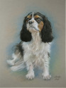 portrait of king charles cavalier#1 (thumbnail)