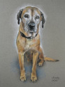pastel, portait, pet portrait (thumbnail)