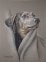 pastel portrait of a dog, pet portrait, pet portrait, pet portrait, pet portrait, pet portrait, pet portrait, pet portrait, pet portrait, pet portrait, pet portrait, pet portrait, pet portrait, pet portrait, pet portrait, pet portrait, pet portrait, pet (thumbnail)
