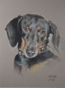 DOG PORTRAITS, DOG PORTRAITS, DOG PORTRAITS, DOG PORTRAITS, DOG PORTRAITS, DOG PORTRAITS, DOG PORTRAITS, DOG PORTRAITS, (thumbnail)