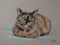 pet portrait, pet portrait, pet portrait, pet portrait, pet portrait, pet portrait, pet portrait, pet portrait, pet portrait, pet portrait, pet portrait, pet portrait, pet portrait, (thumbnail)