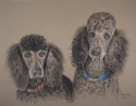 pet portrait, pet portrait, pet portrait, pet portrait, pet portrait, pet portrait, pet portrait, pet portrait, pet portrait, pet portrait, pet portrait, pet portrait, pet portrait, pet portrait, pet portrait, pet portrait, (thumbnail)