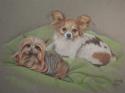 Ellie's dogs (thumbnail)