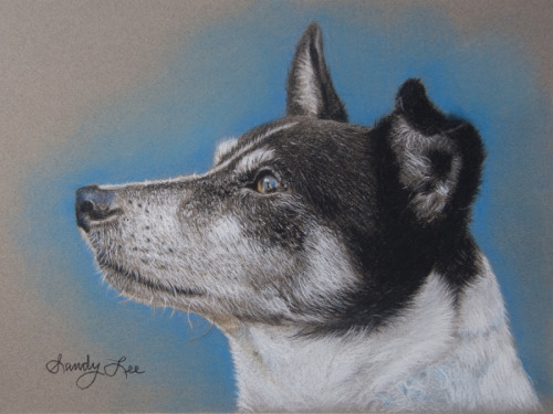 COMMISSIONED PASTEL DOG PORTRAIT