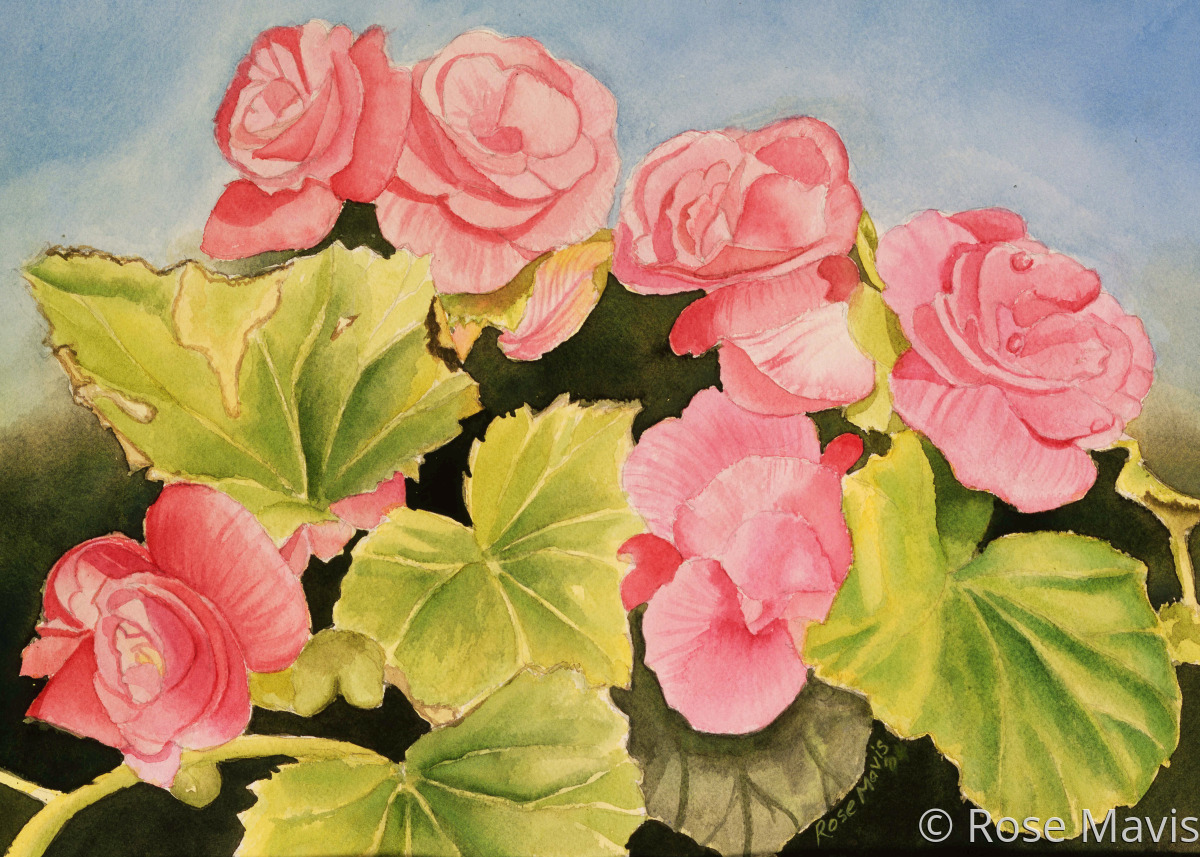 A array of begonias to capture your interest. Watercolors on paper.  (large view)