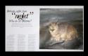 Magazine Layout (thumbnail)