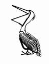 Pelican in Type (thumbnail)