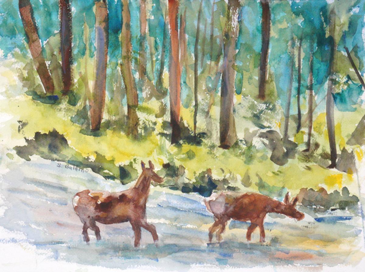 Elks Crossing (large view)