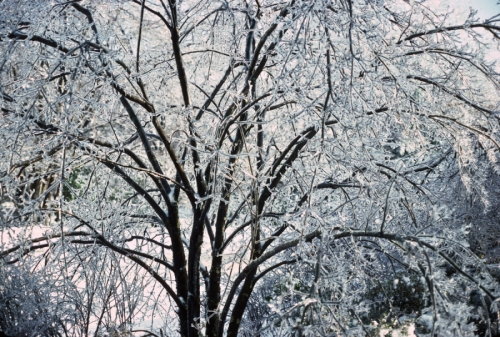 Icy Tree by Fine Art Photography by Bitel
