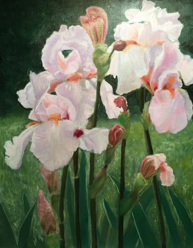 Delicate Pink Iris