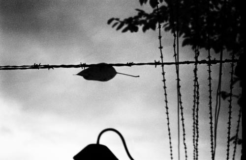 Leaf by Scott Alan Brill