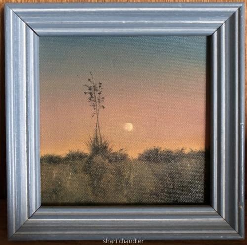 Golden Yucca