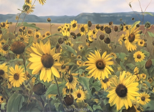 New Mexico Sunflowers