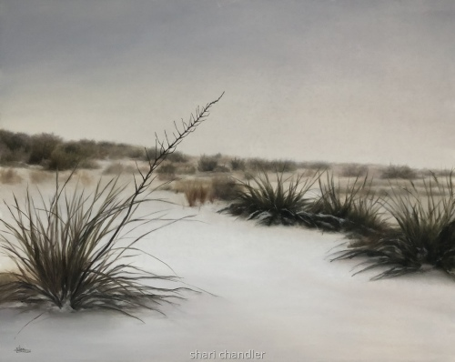 Desert Winter