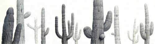 Saguaro Meeting 1