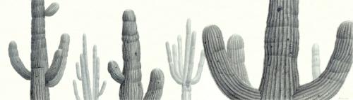 Saguaro Meeting 2