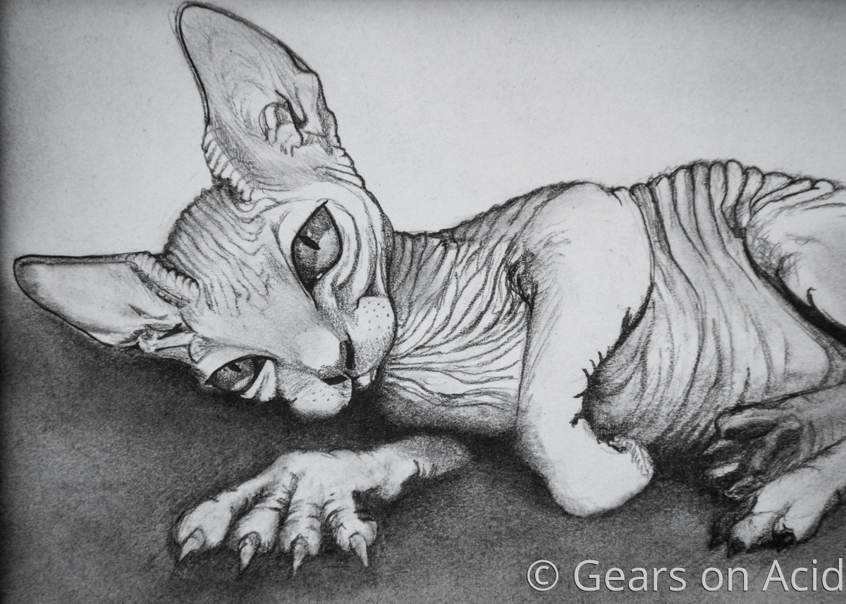 Sphynx Kitty (large view)