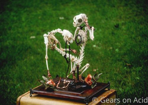 Curiosity by Gears on Acid