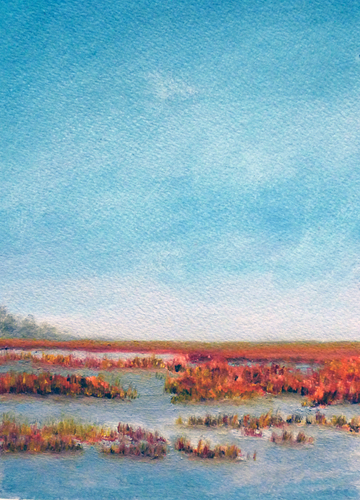 Marsh Study (large view)