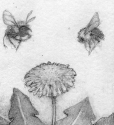 Bees and Dandelion (thumbnail)