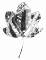 Leaf (thumbnail)