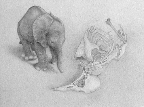 ELEPHANT AND BIRD SKELETON