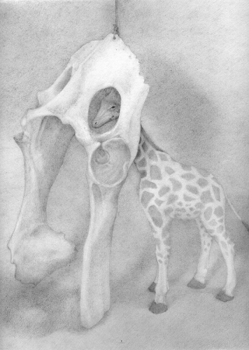 GIRAFFE AND HIP BONE