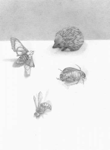 HEDGEHOG AND INSECTS