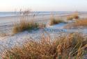 BEACH GRASSES (thumbnail)