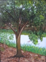 tree with Mergansers on pond (thumbnail)