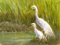 Oil painting of a Great White Egret and a Snowy Egret in a marsh setting. (thumbnail)