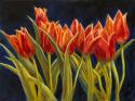 Dancing Tulips (thumbnail)