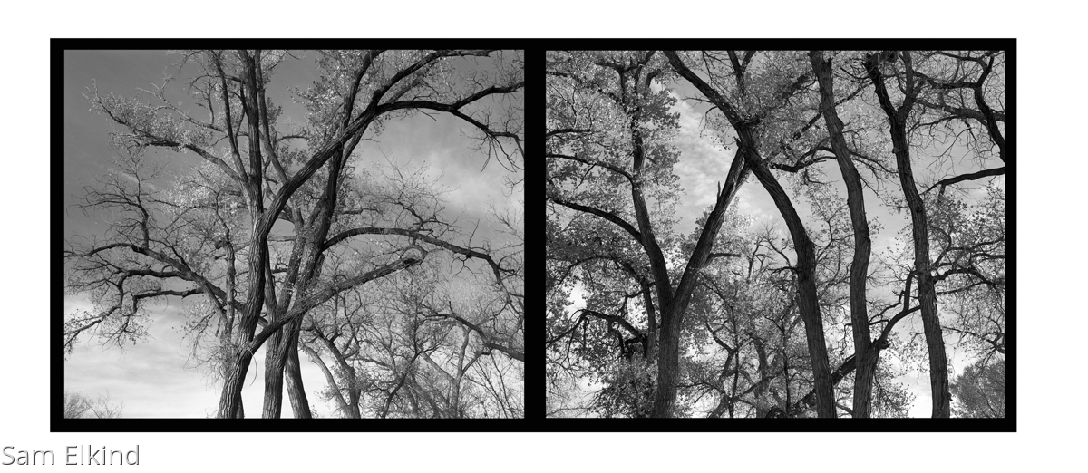 Abiquiu Trees - 1 (large view)