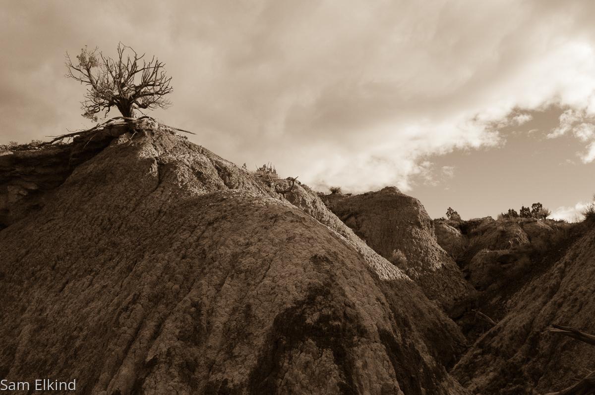 Arroyo Around Tree (large view)