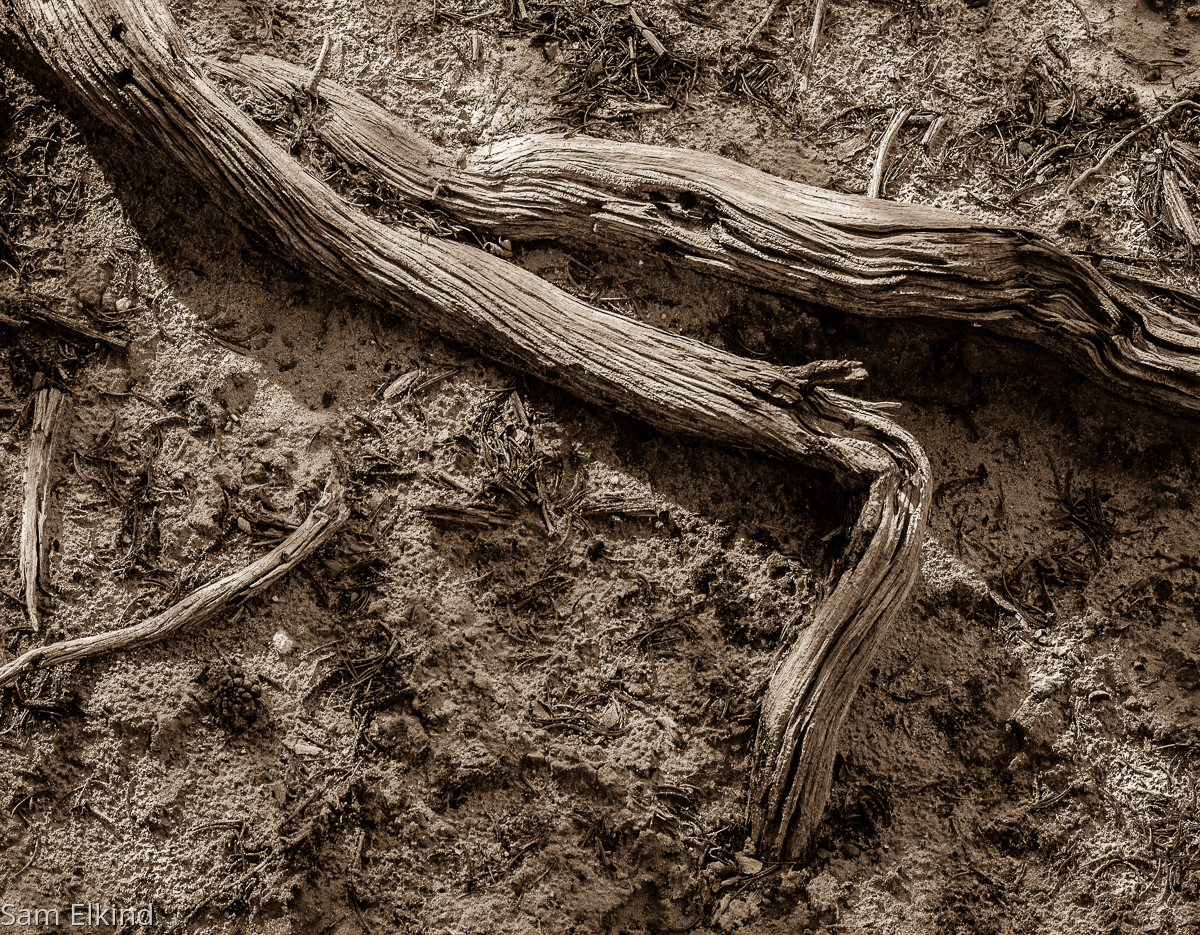 Dry Roots (large view)