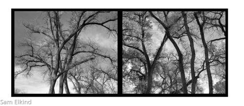 Abiquiu Trees - 1