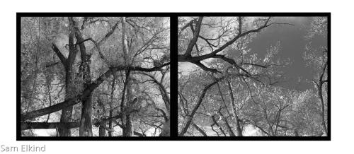 Abiquiu Trees - 2