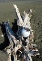 Driftwood Pod (thumbnail)