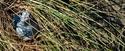 Dune Grass Pod (thumbnail)