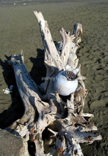 Driftwood Pod