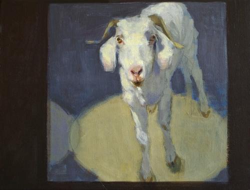 Goat in a Box